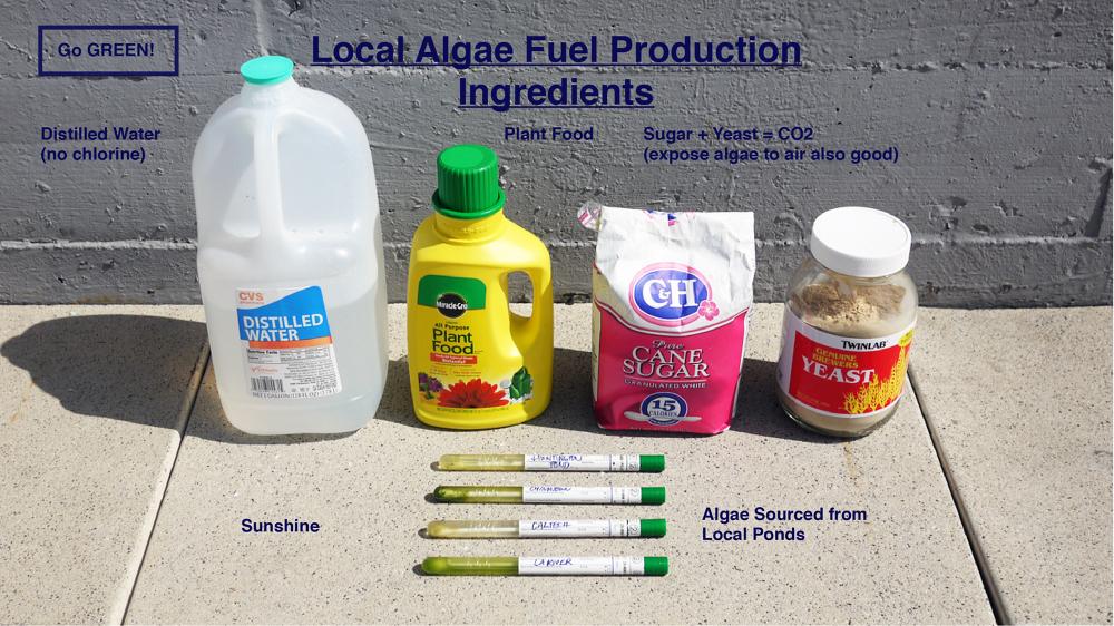 algae research paper